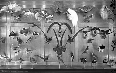 http://images.library.amnh.org/d/t/8x10/0001/00031959_l.jpg