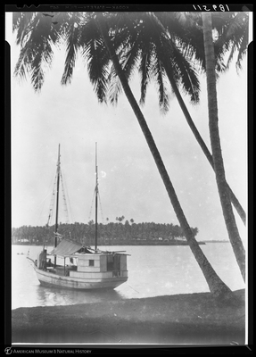 http://lbry-web-002.amnh.org/san/to_upload/Beck-PapuaNewGuinea/NG-5x7-negs/115681.jpg