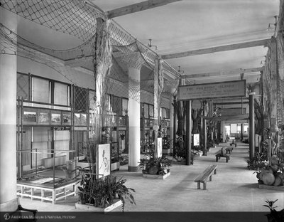 http://images.library.amnh.org/d/t/8x10/0001/00032877_l.jpg