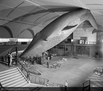 http://images.library.amnh.org/d/t/8x10/0002/00333998_l.jpg