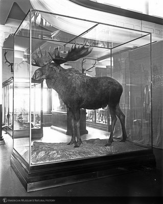 http://images.library.amnh.org/d/t/8x10/0001/00034190_l.jpg